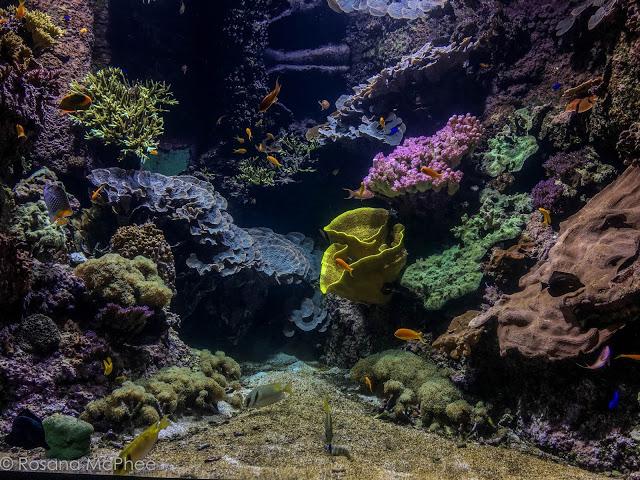 La Rochelle Aquarium by Hot&Chilli Blog