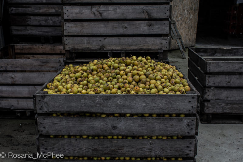 Pacory pear cider farm, pear cider fruit, Domfront, Normandy cidre